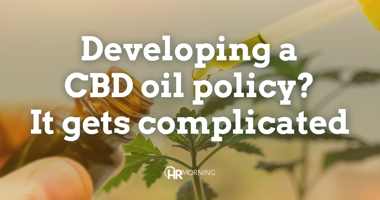 Developing a CBD oil policy